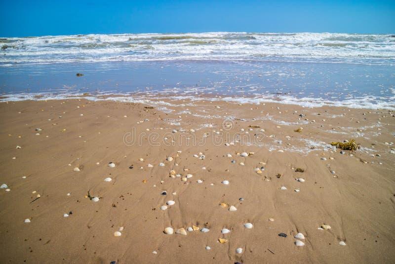 Plage avec beaucoup de coquillages sur le bord de la mer en île du sud d'aumônier, le Texas photo libre de droits