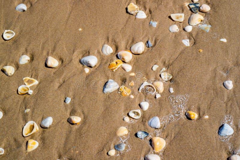 Plage avec beaucoup de coquillages sur le bord de la mer en île du sud d'aumônier, le Texas images libres de droits