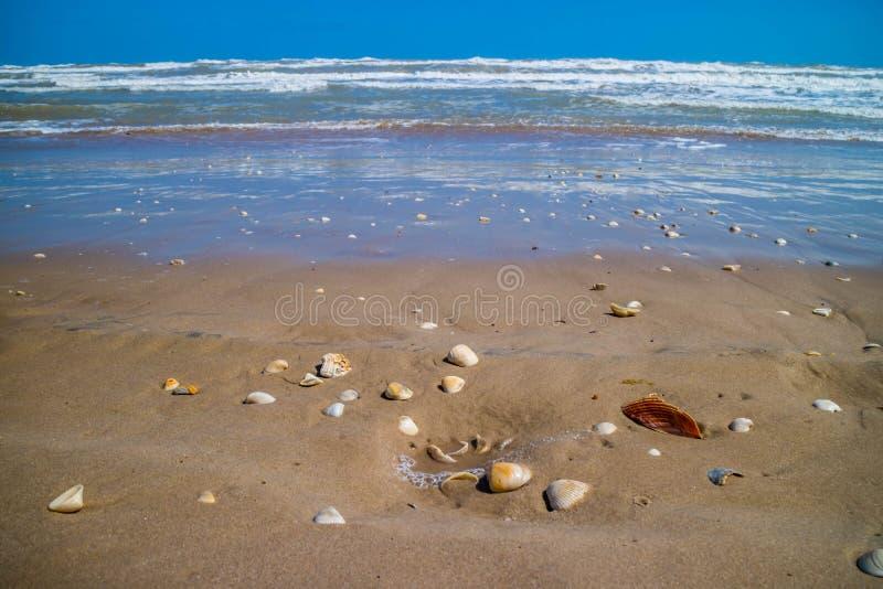 Plage avec beaucoup de coquillages sur le bord de la mer en île du sud d'aumônier, le Texas images stock