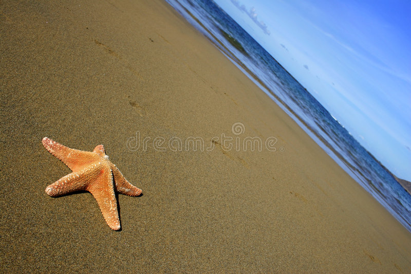 Plage avec des étoiles de mer image stock