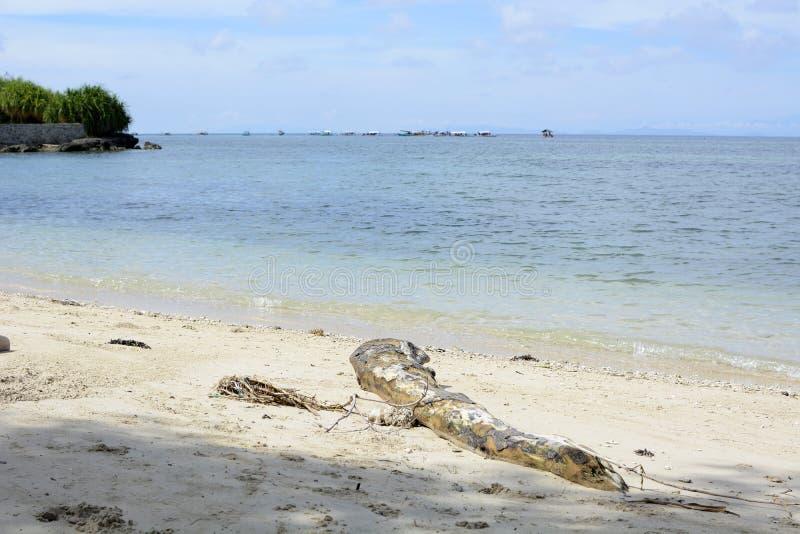 Plage blanche en bois de sable de dérive côtière photographie stock