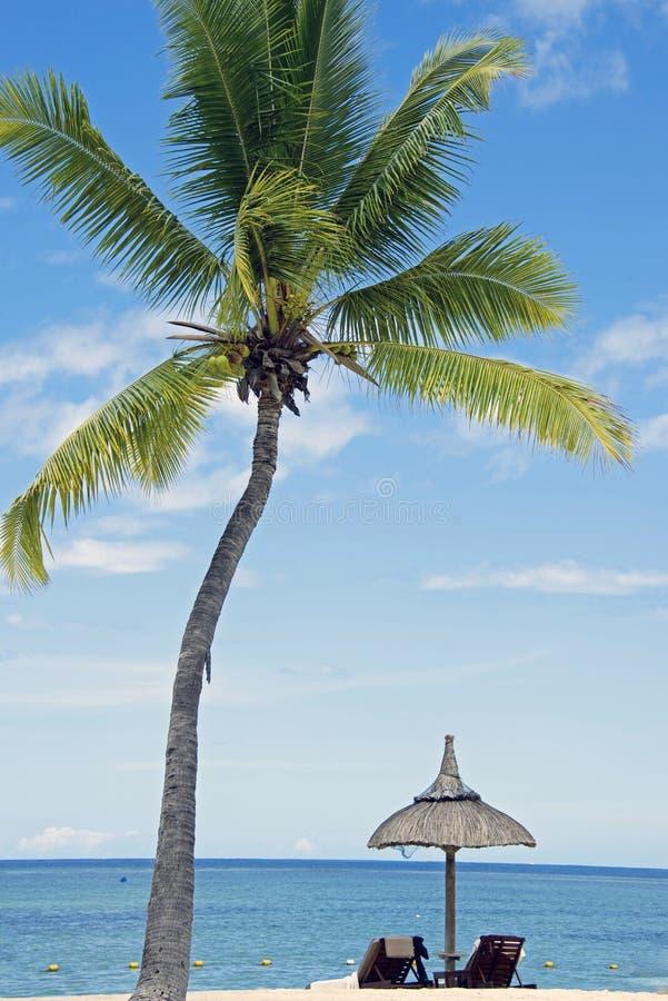 Plage blanche tropicale de sable avec des arbres de noix de coco,