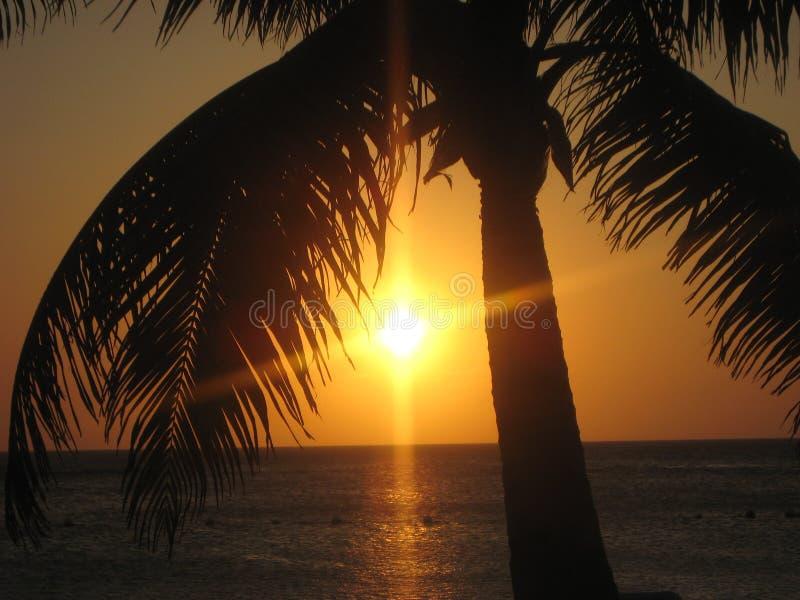 Plage Coucher de soleil Roatan Гондураса более Palmier стоковое фото rf