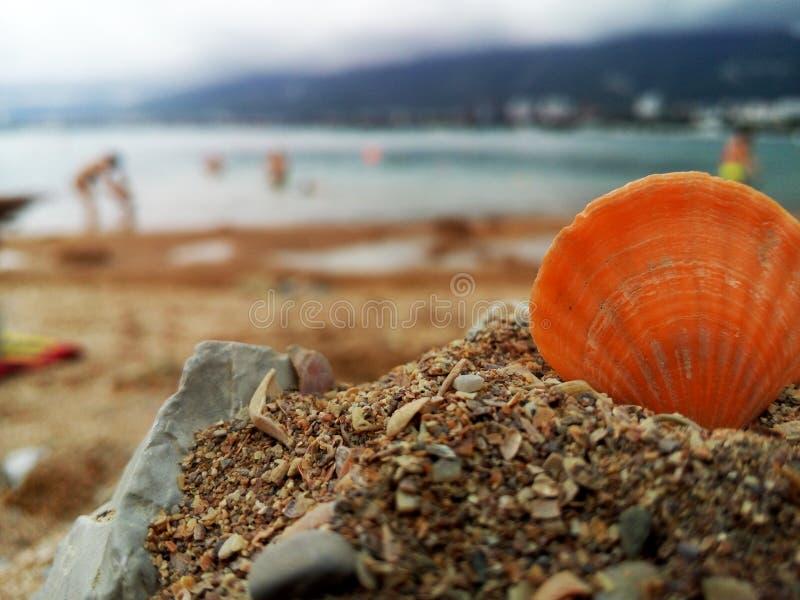 Plage d'été avec la coquille photographie stock libre de droits