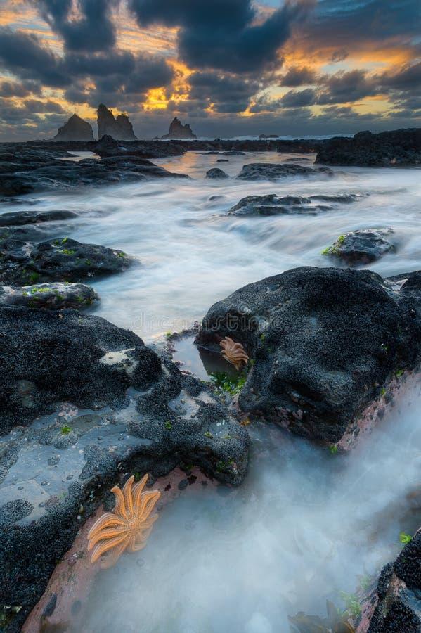 Plage d'étoile de mer photographie stock