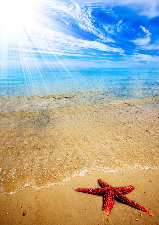 Plage d'étoiles de mer photos stock