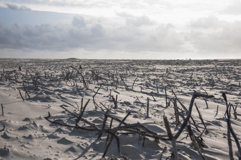 Plage d'île de mer image libre de droits