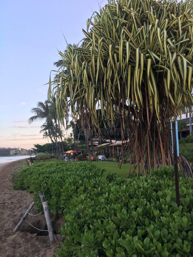 Plage d'Hawaï image libre de droits