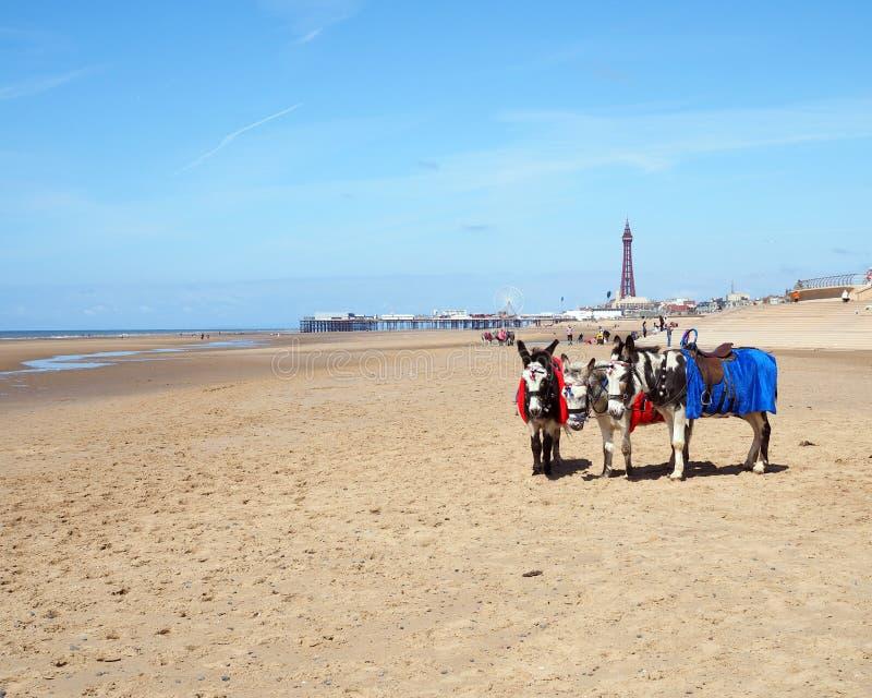 Plage de Blackpool photo stock