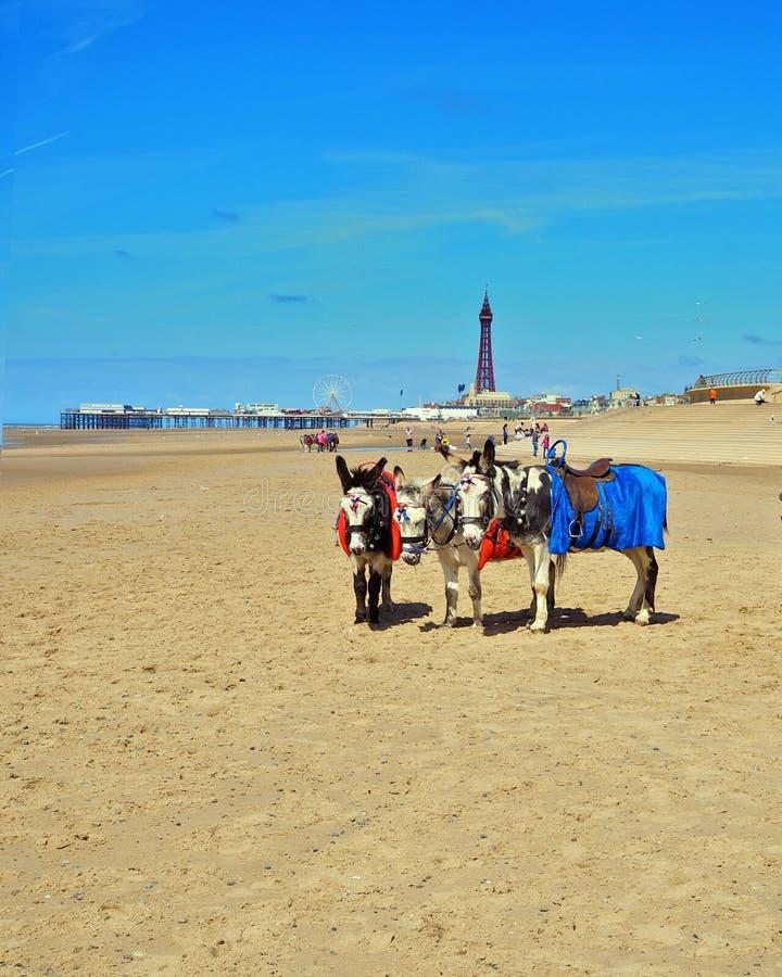 Plage de Blackpool image libre de droits