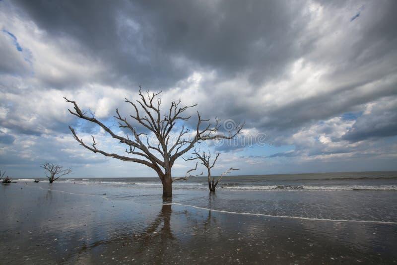 Plage de Boneyard d'arbres, compartiment de botanique, Sc d'île d'Edisto photographie stock