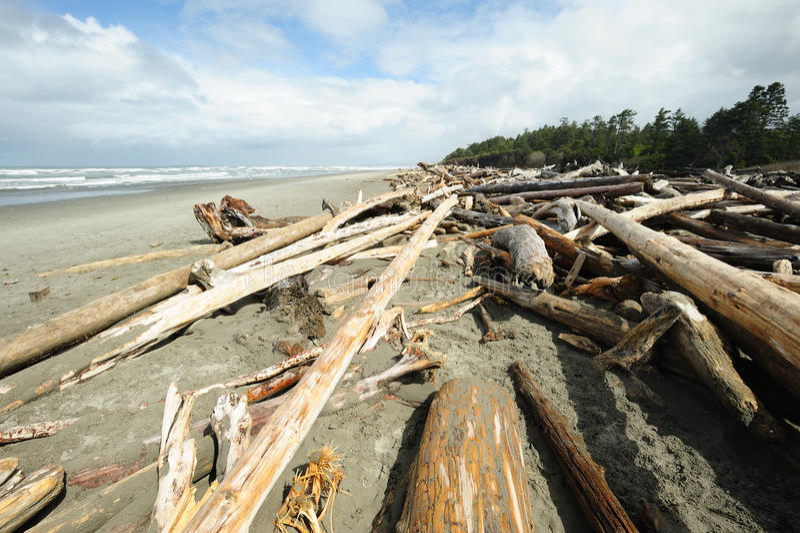 Plage de Côte Pacifique photo stock