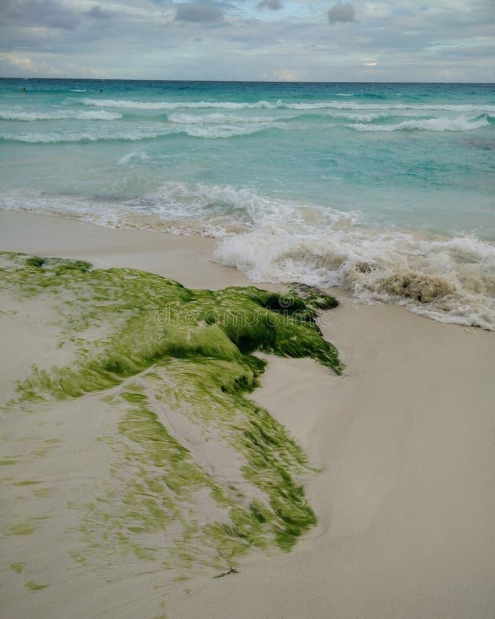 Plage de Cancun images libres de droits