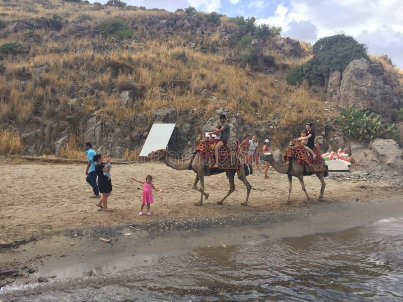 Plage de chameau photographie stock