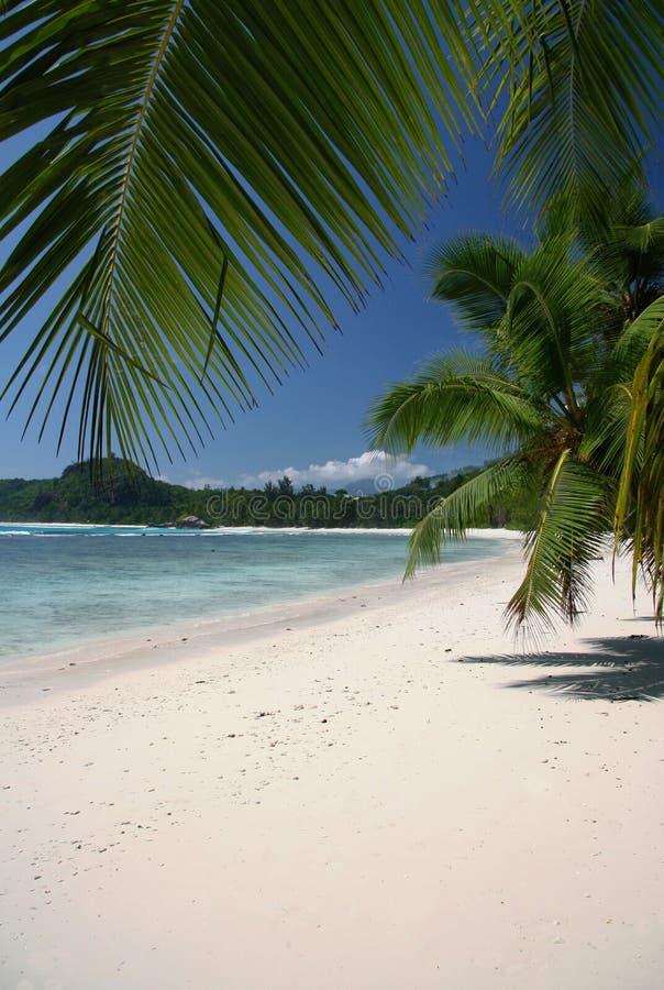 Plage de Cocos image libre de droits