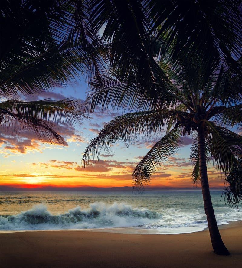 Plage de coucher du soleil avec les palmiers et le beau ciel photo stock