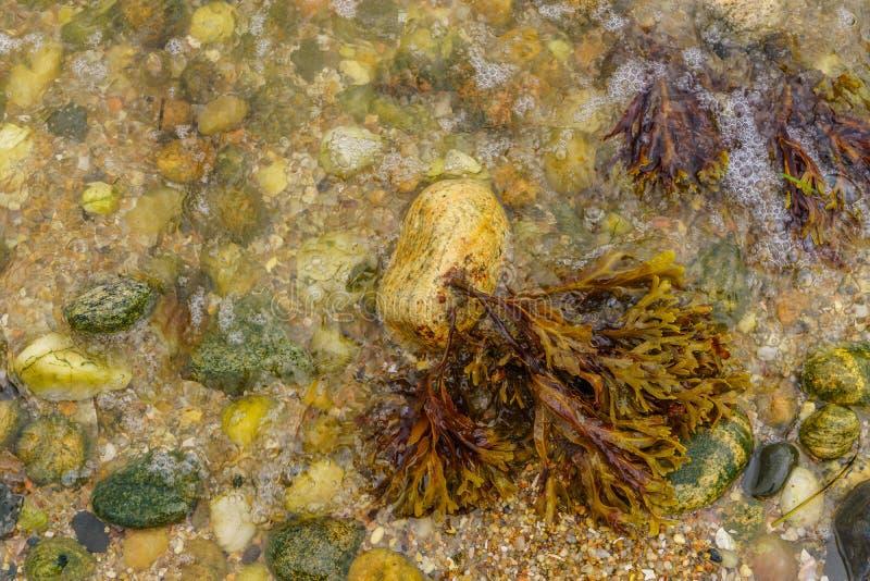 Plage de l'Orient, Long Island d'algues d'eau de mer photographie stock libre de droits