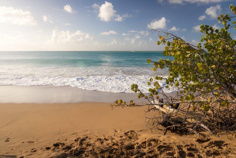 Plage de la珀尔-瓜德罗普,加勒比 免版税图库摄影
