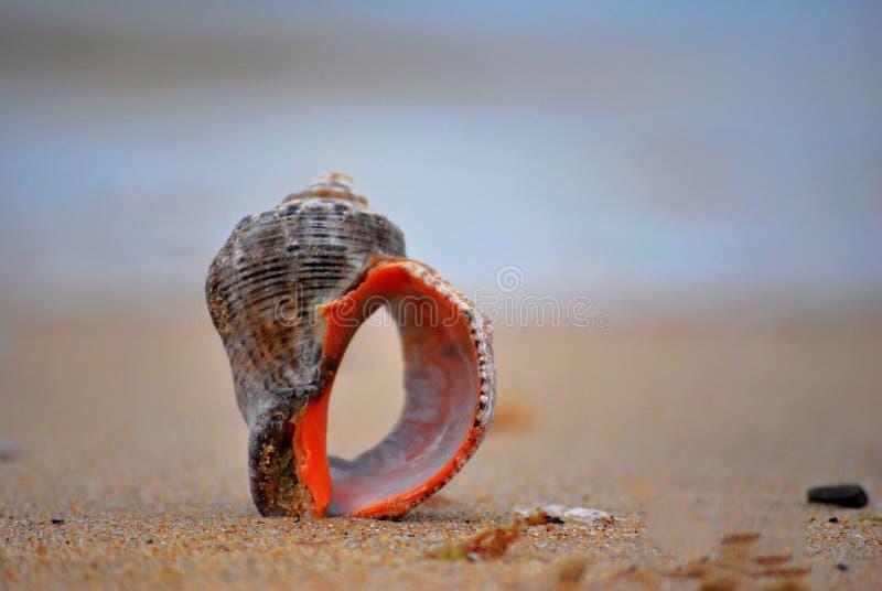 Plage de la Mer Noire photographie stock
