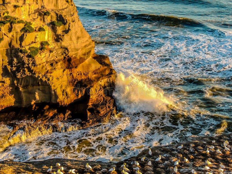 Plage de Muriwai, île du nord, Auckland, nouveau Zeaalnd photographie stock libre de droits
