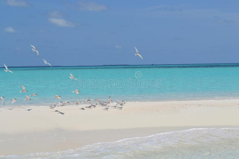 Plage de paradis de Maledives photo stock