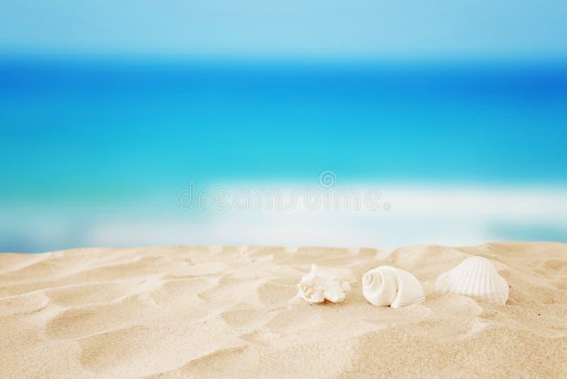 Plage de sable et coquilles vides devant le fond de mer d'été avec l'espace de copie photo stock