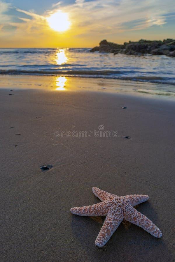 Plage de Starfish au coucher du soleil photographie stock