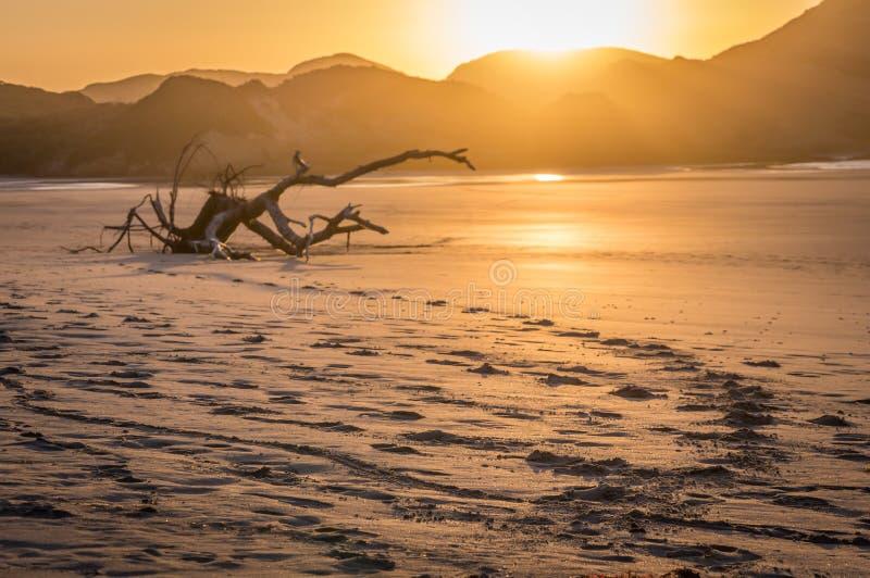 Plage de Wharariki, île du sud, Nouvelle-Zélande photos stock