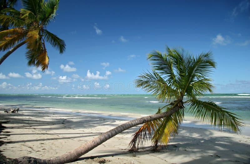 Plage Des Caraïbes Photographie Gratuite