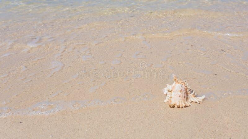 Plage et coquille de mer image libre de droits