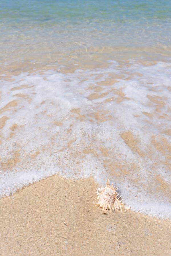 Plage et coquille de mer photographie stock