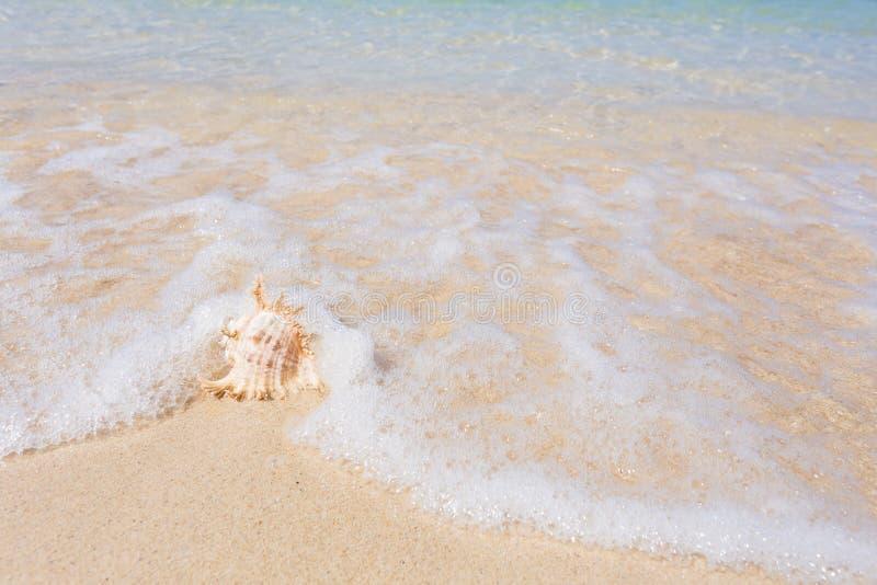 Plage et coquille de mer photo stock