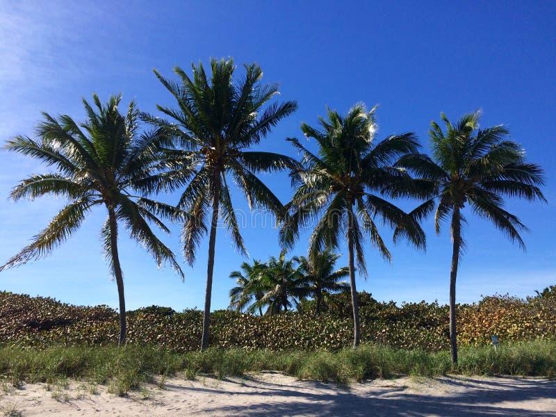 Plage Miami Etats-Unis de Palmtrees Dania images stock