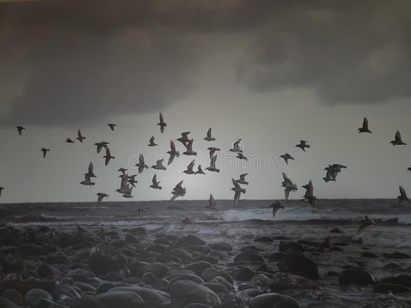 Plage noire d'oiseaux image stock