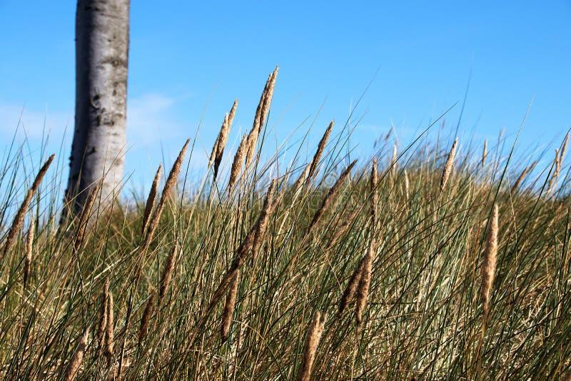Plage occidentale Prerow de roseau des sables photos stock