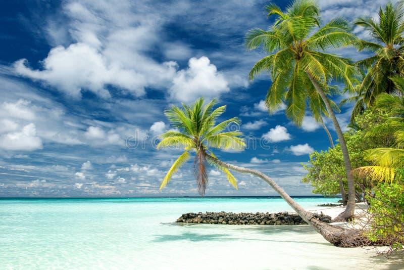 Plage paradisiaque tropicale photos libres de droits