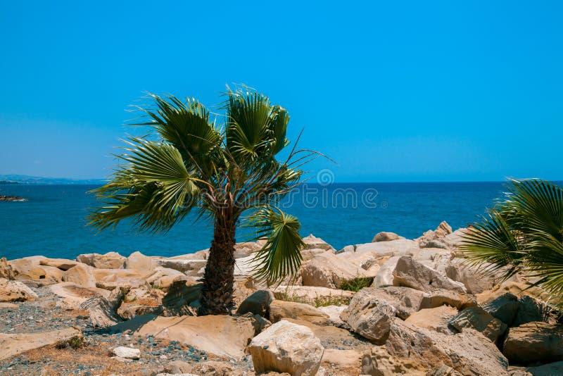 Plage rocheuse avec le palmier photos stock