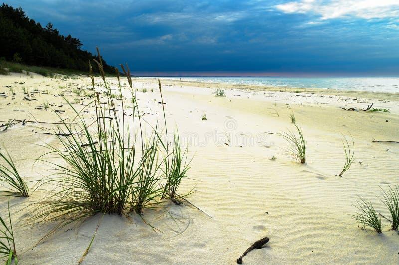 Plage sablonneuse à la mer baltique avec de l'ivraie croissante de sable, arenarius de Leymus Ciel tempétueux orageux dramatique image libre de droits