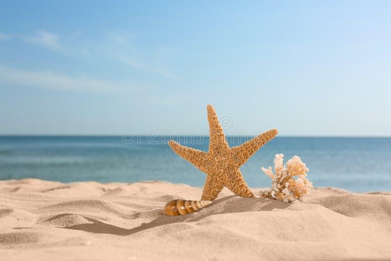 Plage sablonneuse avec les étoiles de mer, la coquille et le corail près de la mer le jour ensoleillé d'été image stock