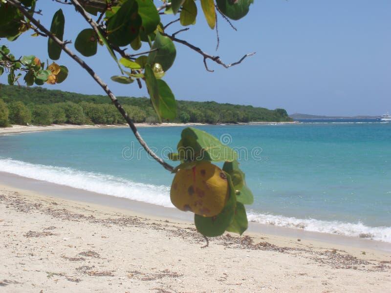 Plage sablonneuse des Caraïbes parfaite reculée images stock