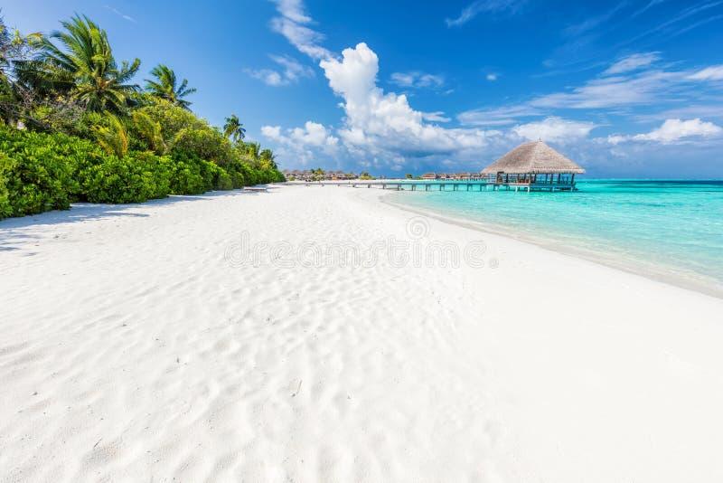 Plage sablonneuse large sur une île tropicale en Maldives Paumes et wat image libre de droits