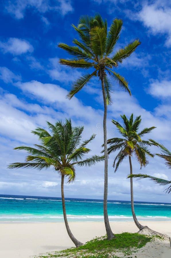 Plage sablonneuse tropicale avec des palmiers, des Caraïbes photos stock