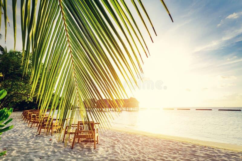 Plage sablonneuse tropicale sur les Maldives photos libres de droits