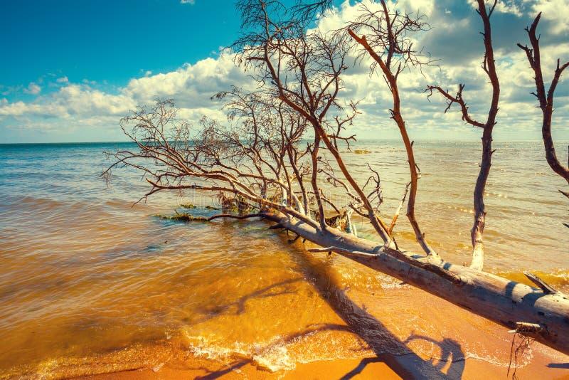 Plage sauvage de désert avec l'arbre mort tombé photo libre de droits