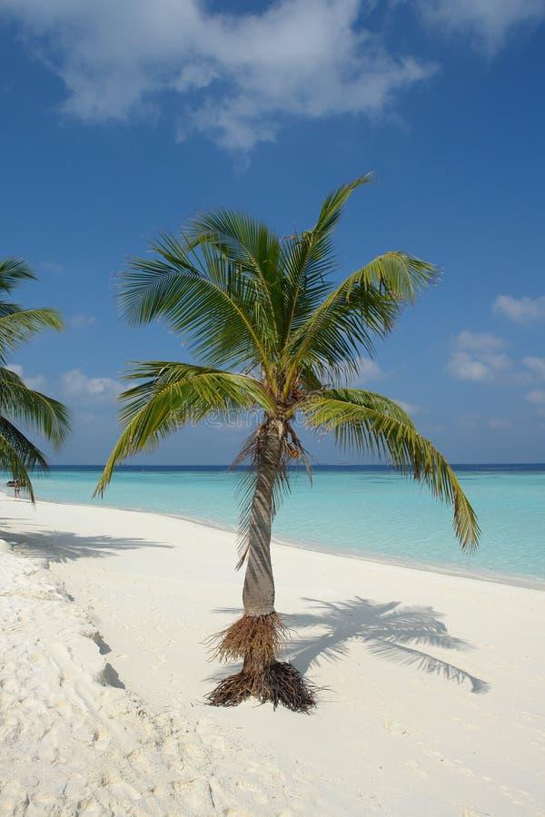 Plage sur une île Maldive image stock