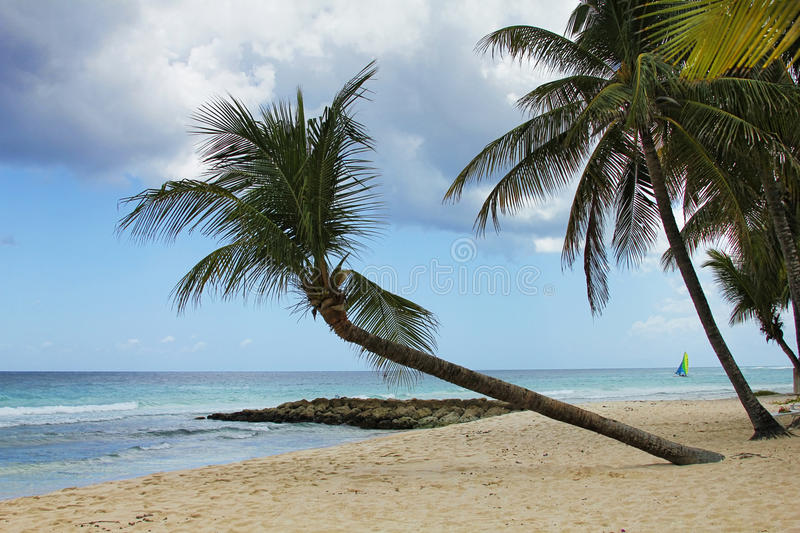 Download Plage tropicale image stock. Image du paradis, appréciez - 56487091