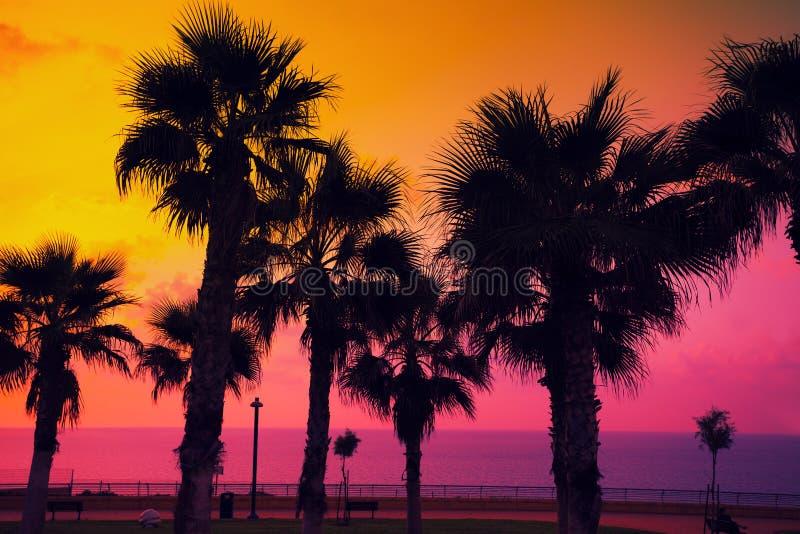Plage tropicale avec des palmiers au coucher du soleil image stock
