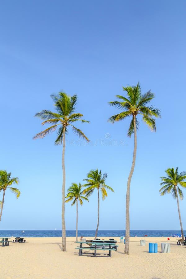 Plage tropicale avec des palmiers dans le Fort Lauderdale photos stock