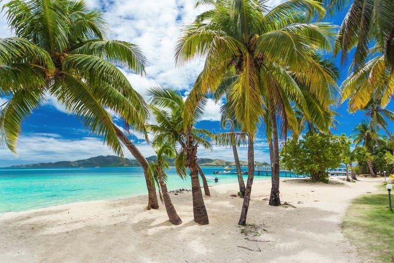 Plage tropicale avec des palmiers de noix de coco et - Palmier noix de coco ...