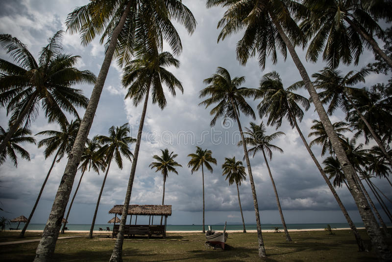 Plage tropicale avec des paumes photo stock